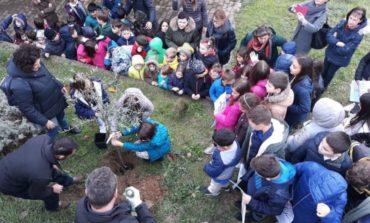 """Giornata degli alberi, """"più verdi"""" i giardini pubblici di Panicale, Piegaro e Paciano"""