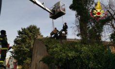 Abitazione minacciata dal crollo di un albero: ci pensano i Vigili del fuoco