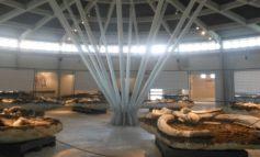Augusto Peltristo e la Civica Piegaro invitano la presidente Tesei e l'assessore Agabiti a visitare il Museo Paleontologico