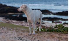 Adozione cani randagi: approvata la mozione della Lega per un incentivo economico