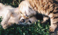 """Coronavirus, famiglie in difficoltà: a Tuoro arriva la """"spesa sospesa"""" per gli animali domestici"""
