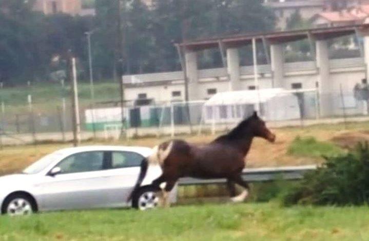 Cavallo imbizzarrito a Magione, la polizia locale aiutata dai cittadini