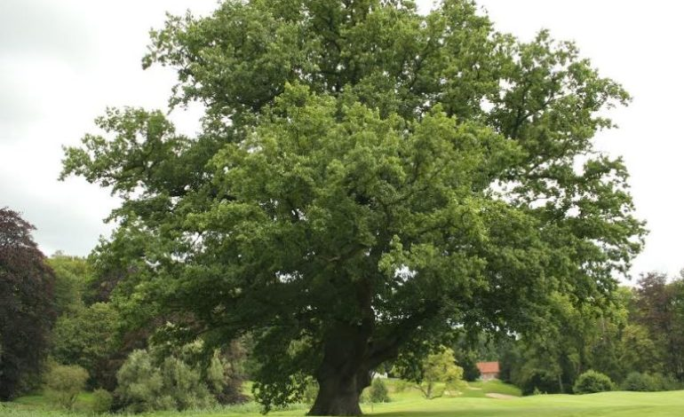 Luci sul Trasimeno: arrivano le prime querce adottate