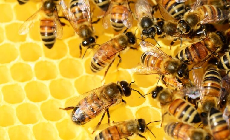 agricoltura ambiente api ecologia miele citta-della-pieve economia