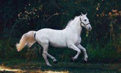 """""""Cavalli e cavalieri"""", il fascino della tradizione equestre accende il centro storico"""