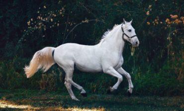 Endurance, il 26 e 27 giugno Campionato italiano pony e Under14