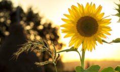 Oggi comincia l'estate: dalla settimana prossima temperature in aumento