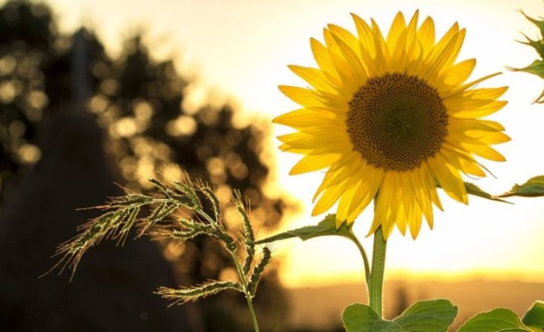 caldo estate meteo sole solstizio stagioni glocal