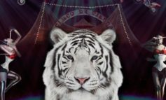 Fino al 30 Agosto il Circo di Vienna sarà a Castiglione del Lago