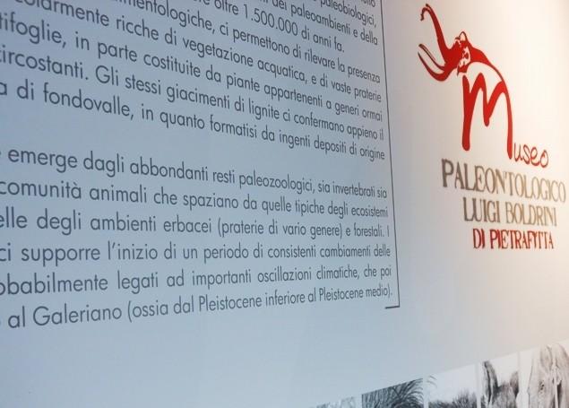 Il Museo paleontologico riapre le porte ai visitatori con visite guidate