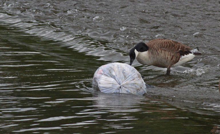carta del lago goletta dei laghi lago legambiente microplastiche progetto cronaca