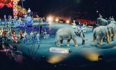 """""""No al circo con animali a Castiglione del Lago"""", dura lettera dell'associazione vegani"""