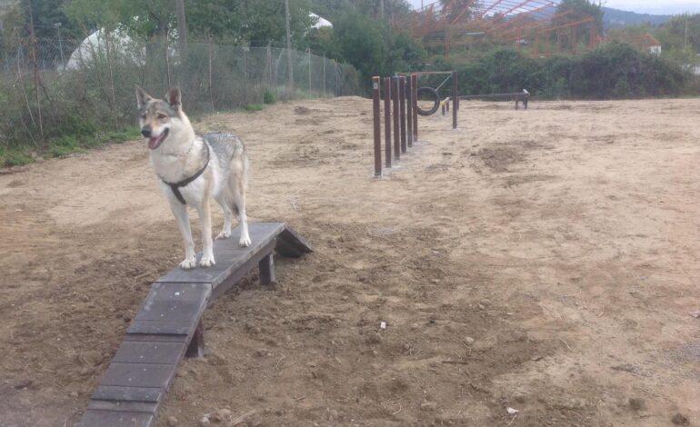 agility dog animali cani dog park cronaca magione