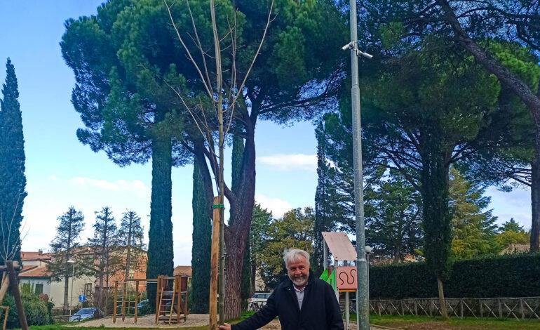 alberi festa degli alberi parco giochi citta-della-pieve cronaca