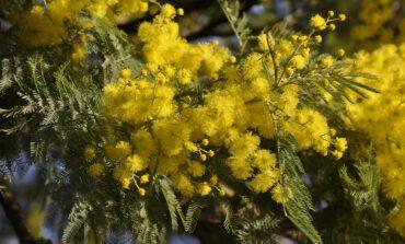 8 marzo: Castiglione del Lago e Paciano celebrano insieme la Giornata Internazionale della Donna
