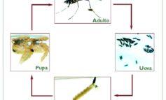 Zanzare: a Magione ordinanza per prevenire e controllare il proliferare degli insetti