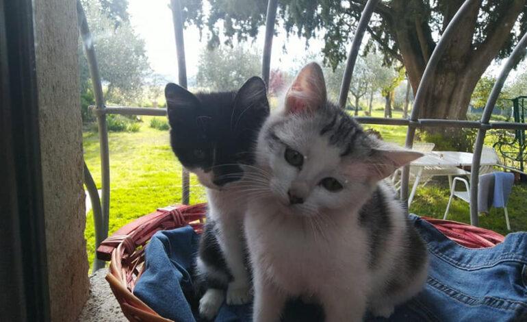 Sparano con la carabina ad un gatto della colonia felina di Sant'Arcangelo