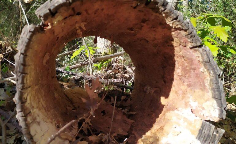 A Piegaro l'ultima tappa della Festa dei boschi 2021