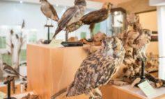 """""""Incontri con la natura"""" al Museo di Storia Naturale e del Territorio"""