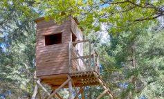 Escursione al Bosco di Piegaro per connettersi con la natura e giocare con le piante