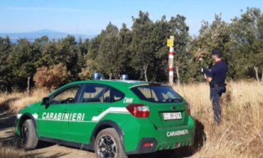 Tartufaie illegali, i carabinieri sequestrano 10 ettari a Passignano